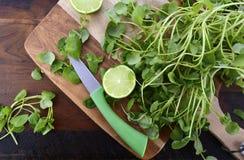 Het ingrediënt van de witte waterkerssalade Royalty-vrije Stock Afbeelding
