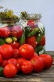 Het inleggen van tomaten Stock Foto's