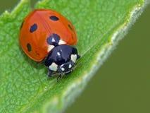 Het insect. Royalty-vrije Stock Afbeelding