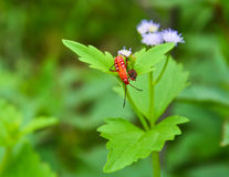 Het Insect Stock Fotografie