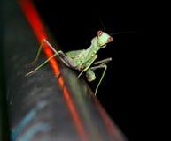 Het insect Stock Afbeeldingen