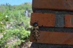 Het insect in de aard stock foto's