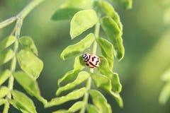 Het insect in ochtend Royalty-vrije Stock Afbeeldingen