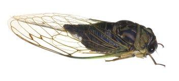 Het insect van Crawly stock foto