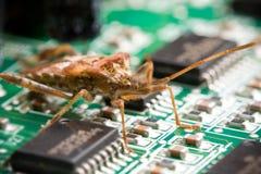 Het Insect van de computer Royalty-vrije Stock Foto's