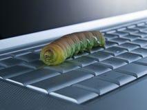 Het insect van de computer Royalty-vrije Stock Foto