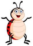Het insect van de dame Royalty-vrije Stock Afbeeldingen