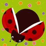 Het insect van de dame vector illustratie