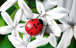 Het insect van de dame Royalty-vrije Stock Fotografie