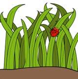 Het insect van de dame in het gras Stock Fotografie