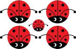 Het insect van de dame met ogen Stock Afbeelding