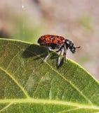 Het insect van de dame op een groen blad royalty-vrije stock foto's