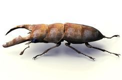 Het insect van de metaalrobot op wit met het knippen van weg, 3D illu wordt geïsoleerd die Stock Fotografie