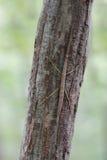 Het insect van de wandelstok op boomboomstam stock foto