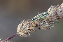 Het insect van de weideinstallatie op neiging stock afbeeldingen