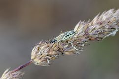 Het insect van de weideinstallatie op neiging royalty-vrije stock fotografie