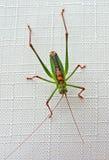 Het insect van de zomer Stock Afbeeldingen