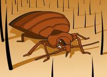 Het Insect van het bed Royalty-vrije Stock Foto's