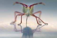 Het insect van het insect Royalty-vrije Stock Fotografie