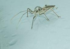 Het Insect van het wiel stock foto