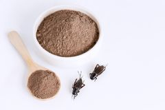 Het insect van het veenmolpoeder voor het eten als voedselpunten van gekookt insectvlees worden gemaakt in kom en houten lepel op royalty-vrije stock afbeeldingen