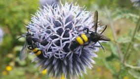 Het insect vond een comfortabele plaats royalty-vrije stock afbeeldingen