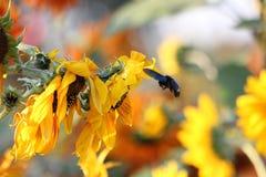 Het insect werkt in de dag stock foto