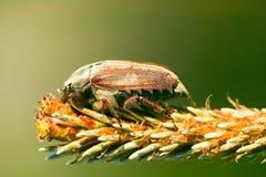 Het insect zit op bloem, macro Stock Afbeeldingen