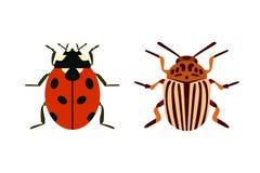 Het insectpictogram isoleerde de kevermier van aard vlak vliegend insecten en de sprinkhaan van de het wildspin of mugkakkerlakke Stock Fotografie