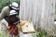 Het inspecteren van de Bijenkorf Stock Fotografie