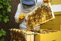 Het inspecteren van de imker bijenkorf Stock Foto's
