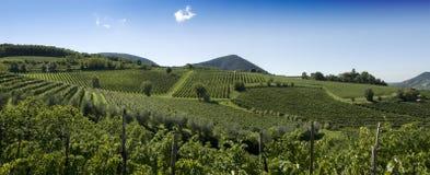 Het Italiaanse Panorama van Wijngaarden Stock Afbeelding