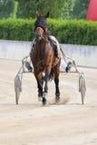 Het Italiaanse rennen van het paard Royalty-vrije Stock Fotografie