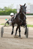 Het Italiaanse rennen van het paard Stock Foto's