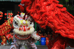 Het Jaarviering van dingenlion dance at chinese new Stock Afbeeldingen