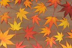 Het Japanse blad van de de herfstesdoorn op bruine houten achtergrond Stock Afbeelding