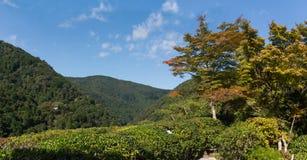Het Japanse panorama van het tuinlandschap Stock Afbeelding