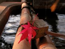 Het Japanse stilleven van de herfst Stock Foto's