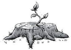 Het Jong boompje van de stomp Royalty-vrije Stock Afbeeldingen