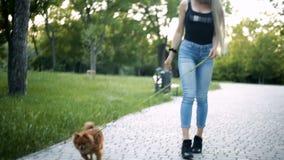 Het jonge blonde vrouwen lange stromende haar loopt in het park met een hond van het Pomeranian-spitz ras stock videobeelden