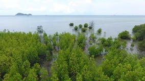 Het jonge Bos van de Mangroveboom bij Kust dichtbij Strand in Koh Phangan, Thailand HD antenne stock footage