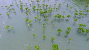 Het jonge Bos van de Mangroveboom bij Kust dichtbij Strand in Koh Phangan, Thailand HD lucht slowmotion stock footage