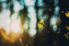 Het jonge de Lente Groene Blad Groeien in Tak van Forest Tree Woods royalty-vrije stock afbeeldingen