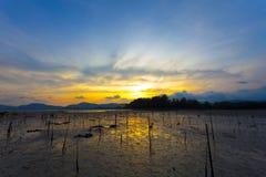 Het jonge gebied van de mangrovenaanplanting in mooie zonsondergang Stock Afbeelding
