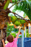 Het jonge geitje oogst de jonge kokosnoten in tropische tuin Stock Foto's