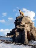Het jonge geitje van de geit op rots Royalty-vrije Stock Afbeelding