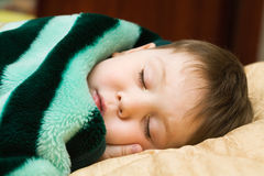 Het jonge geitje van de slaap Stock Foto