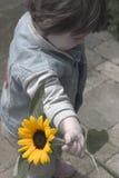 Het Jonge geitje van de zonnebloem stock foto