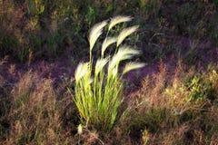 Het jonge Groene Gebied van de Tarwe Rijpende orentarwe Landbouw Natuurlijk product Agricalturallandschap stock fotografie