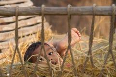 Het jonge jongen spelen in een hooi oxcart stock afbeeldingen